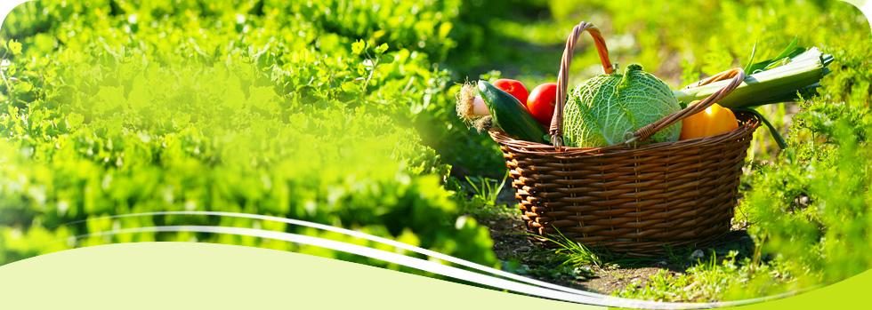 Nos Paniers De L Gumes Bio Les Jardins D 39 Herbauges